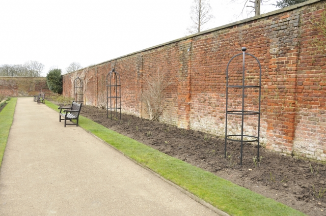 Newly planted rose border at Hampton Court