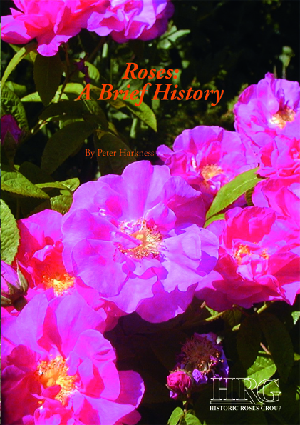 Roses - A Brief History cover