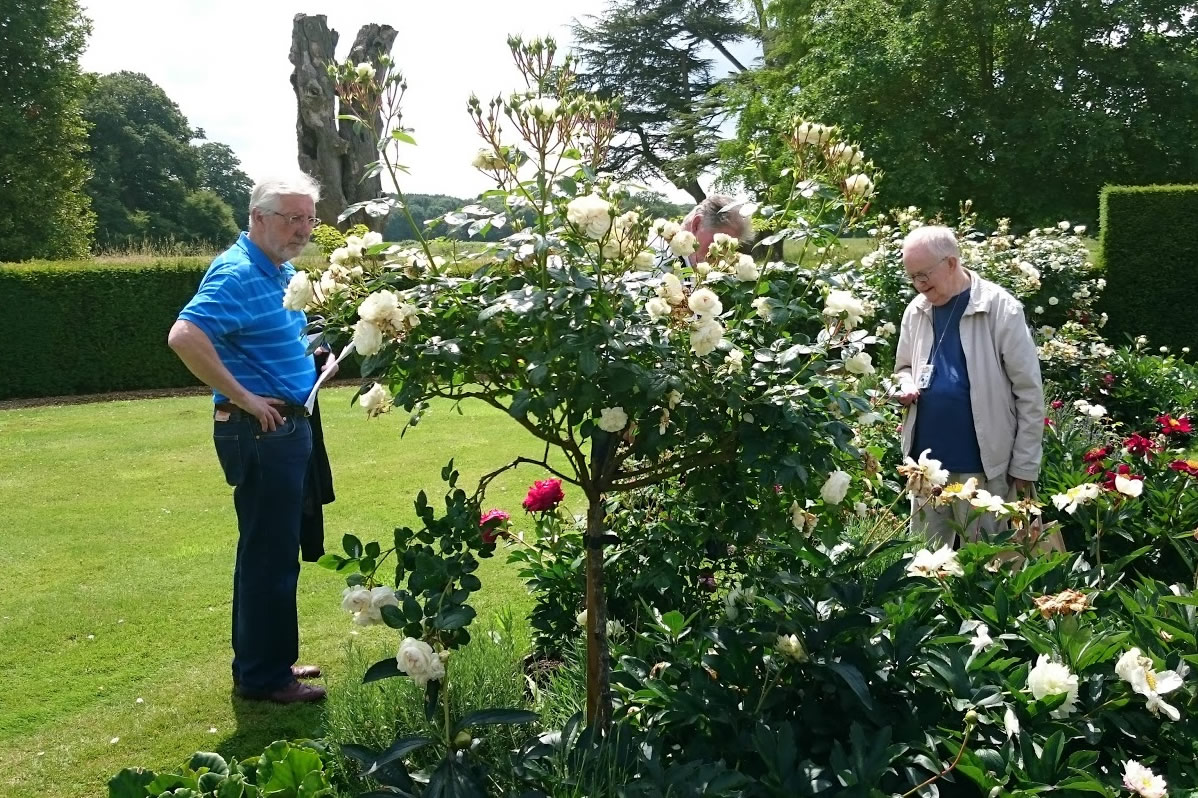 Where to see historic roses