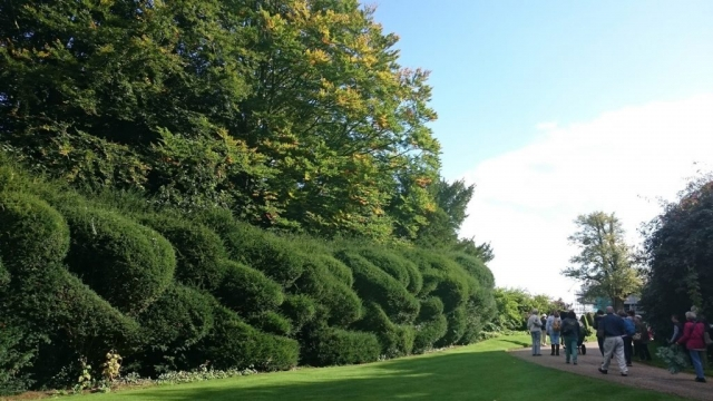 Elephant hedges at Hinton Ampner