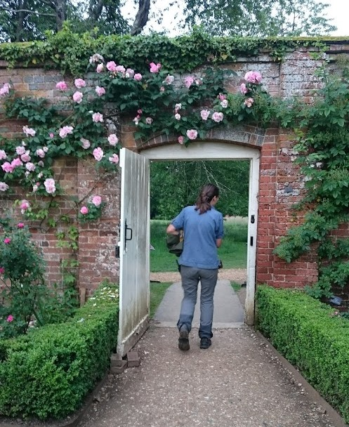 Mottisfont roses on wall